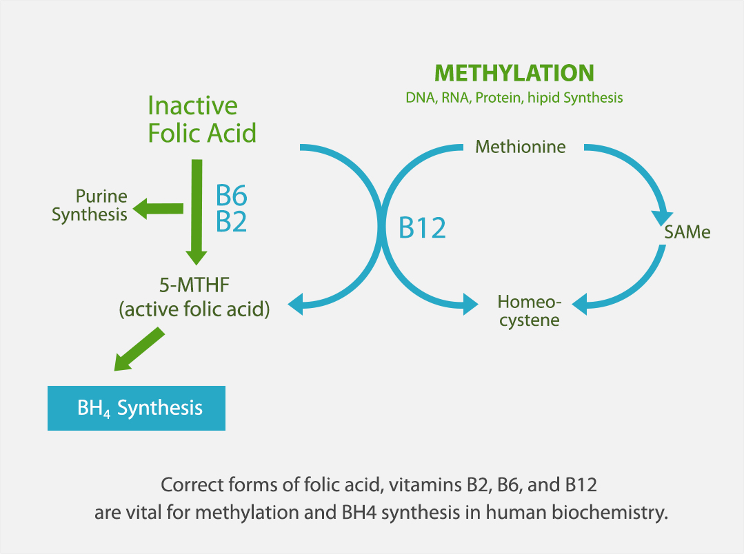 Impaired-methylation-b