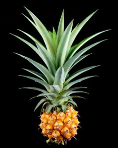 pineapple-382086_640